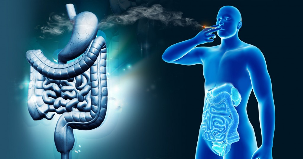 How-cannabis-can-affect-the-digestive-system-in-both-positive-and-negative-ways-Sensi-Seeds-blog
